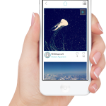 Primary - Instagram App